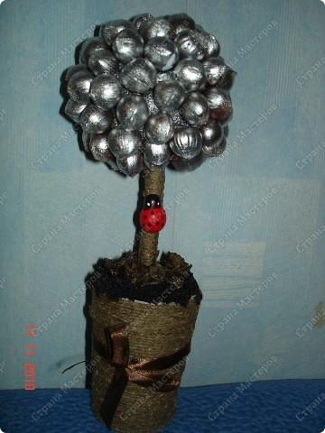 фундуковое деревце