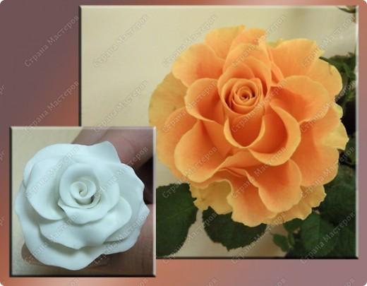 Просмотрела много работ мастеров, разные есть розы...... хочу поделиться как я делаю свои фото 2