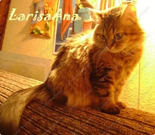 У меня - букет котов Изумительной красы, И  в отличие от цветов, Он мяукает в усы. Я несу букет котов, Дайте скорее вазу. Очень свежие коты - Это видно сразу! фото 8