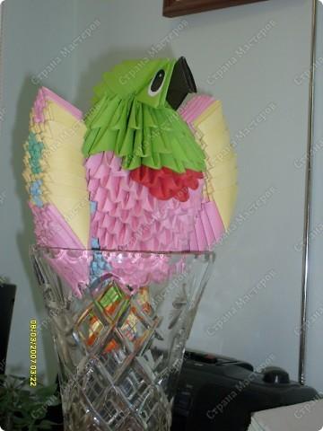 А вот и наш попугайчик.