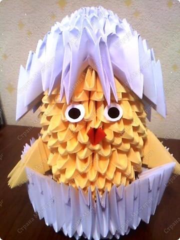 цыплёнок фото 1
