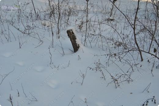 """Поздравляю ВСЕХ с праздником КРЕЩЕНИЯ ГОСПОДНЕ!!! Эх, и морозцы у нас наступили - крещенские морозы!!! Вот захотелось пригласить ко мне в гости - познакомить с местами, где я живу. Проходите!!!  Как-то к нам под новый год заглянул """"корабль пустыни"""" - замерз под елкой-то! фото 5"""