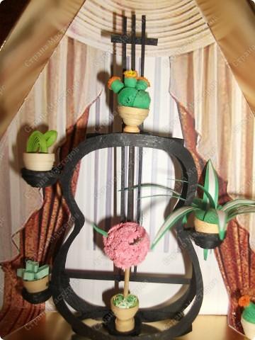 Домашние цветы фото 2