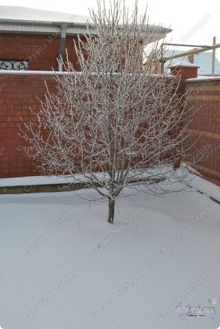 Когда рождественская ель Горит на Рождество, Она сквозь зимнюю метель Приносит в дом тепло.  Это наше чудо-дерево рождественское :-))) фото 2
