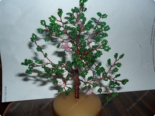 Вот такое деревце фото 2