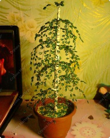 Зимнее дерево фото 2