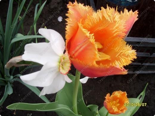 Весенний поцелуй... фото 1