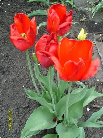 Весенний поцелуй... фото 3