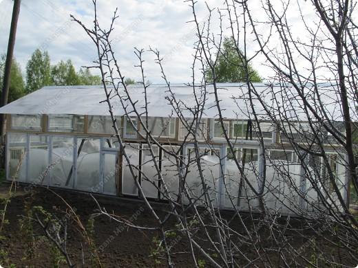 Теплица вид со стороны входа (ширина 3 метра, высота до конька от уровня фундамента 2,80 метра) фото 2