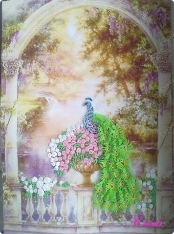 Вот и мой павлин в райском саду. Пока еще без рамки, но в ближайшее время исправлю.  фото 2