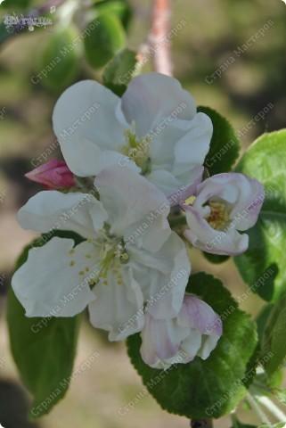 Розовые тюльпаны фото 6