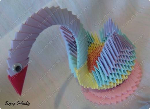 Радужный лебедь  фото 2
