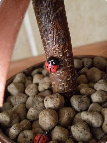 """Мое очередное кофейное дерево,под названием """"Божьи коровки"""",назвала так,потому что на нем обитает небольшое семейство божьих коровок фото 2"""