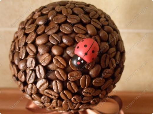 """Мое очередное кофейное дерево,под названием """"Божьи коровки"""",назвала так,потому что на нем обитает небольшое семейство божьих коровок фото 3"""