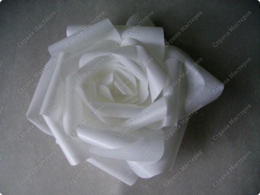 Роза из кальки - легко! фото 1