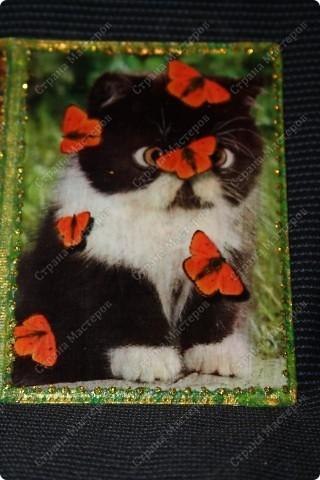 А то для меня любимой обложка на паспорт чудесные котята фото 3