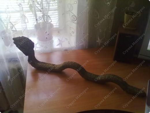 Моя Змейка=) фото 2