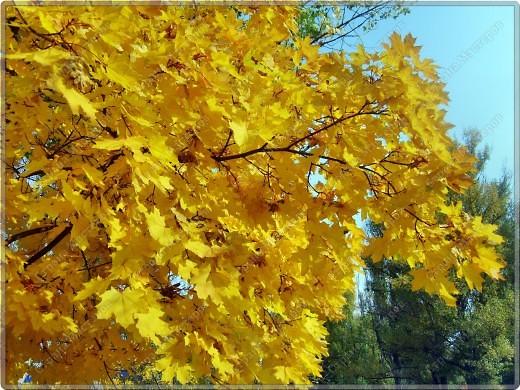Вот гуляли мы с малышкой на выходных - и вот так принарядила Осень улицы нашего городка)  фото 12