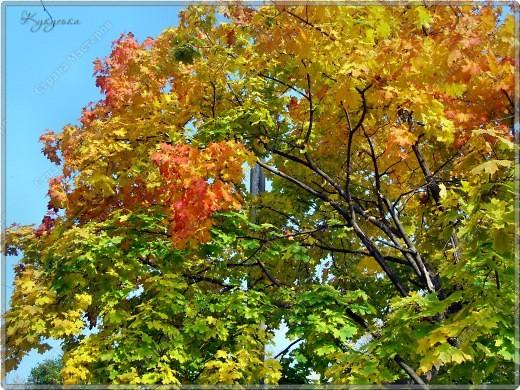Вот гуляли мы с малышкой на выходных - и вот так принарядила Осень улицы нашего городка)  фото 5