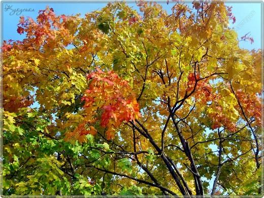 Вот гуляли мы с малышкой на выходных - и вот так принарядила Осень улицы нашего городка)  фото 7