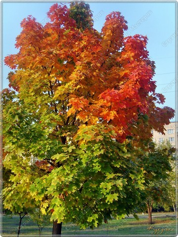 Вот гуляли мы с малышкой на выходных - и вот так принарядила Осень улицы нашего городка)  фото 13