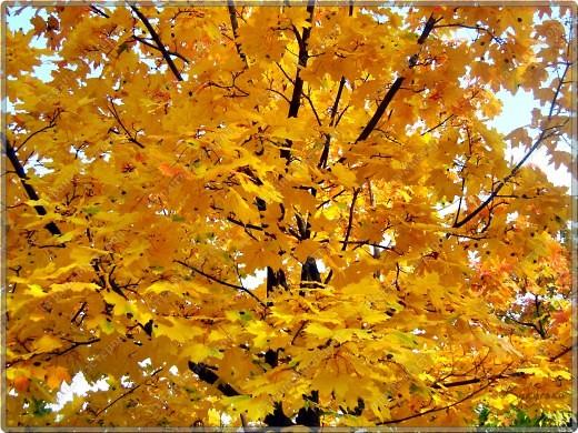 Вот гуляли мы с малышкой на выходных - и вот так принарядила Осень улицы нашего городка)  фото 9