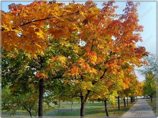 Вот гуляли мы с малышкой на выходных - и вот так принарядила Осень улицы нашего городка)  фото 4