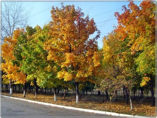 Вот гуляли мы с малышкой на выходных - и вот так принарядила Осень улицы нашего городка)  фото 3