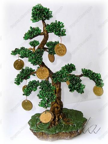 Денежные деревья (2шт)