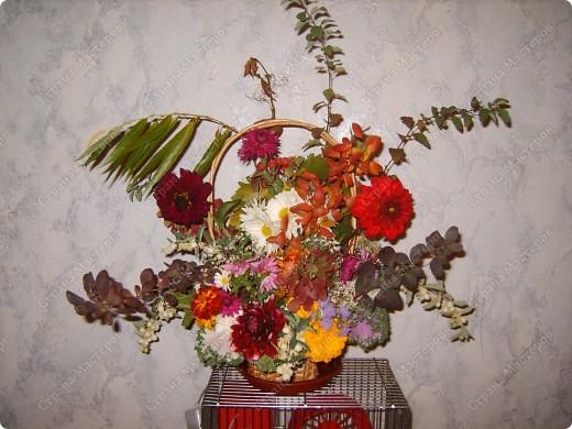 """Мой Фоторепортаж в Рубрике Осень начнётся с необычного """"цветка""""   Это Капуста) фото 10"""
