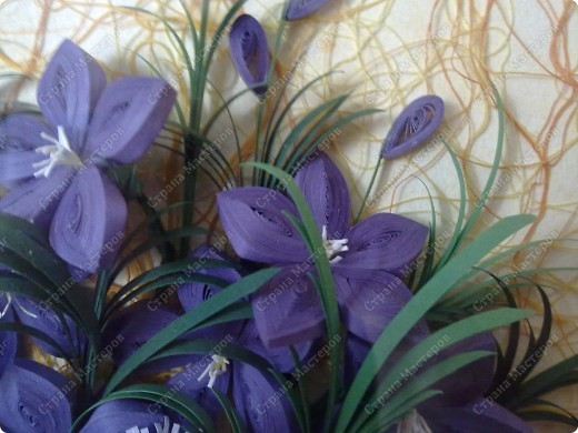 Цветы.... фото 5