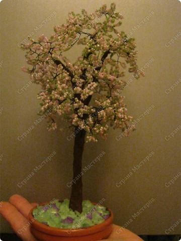 Яблонька! первое дерево!)  фото 1