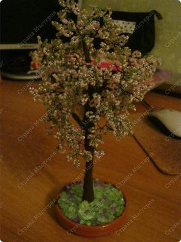 Яблонька! первое дерево!)  фото 2