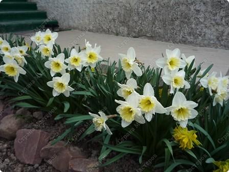 Я вообще-то про цветы.Моя красавица в пионах!  А дочь моя - это наша ГОРДОСТЬ!!!! фото 2