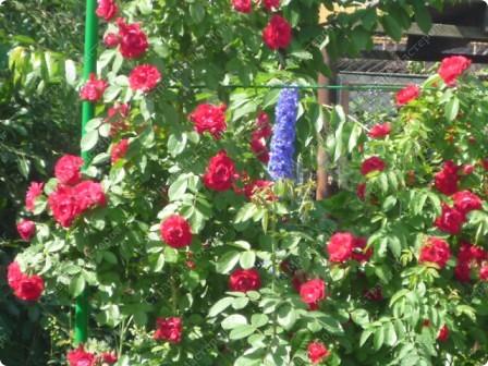 Я вообще-то про цветы.Моя красавица в пионах!  А дочь моя - это наша ГОРДОСТЬ!!!! фото 17