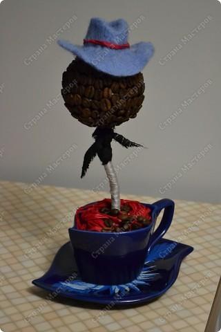 Кофейное дерево фото 7