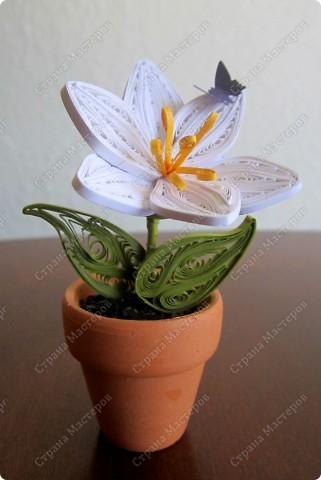 """Всем привет! Вот несколько вазончиков... Нашла маленькие глиняные горшочки и решила """"посадить"""" в них цветочки :)  фото 3"""