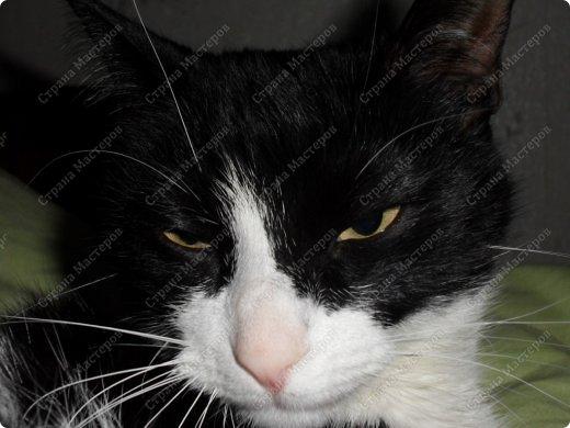 Всем мяу! Я - кошка и решила похвастаться собой! А то, так называемая хозяйка, одно поделочки свои выкладывает, но я ведь лучше!  фото 6