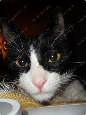 Всем мяу! Я - кошка и решила похвастаться собой! А то, так называемая хозяйка, одно поделочки свои выкладывает, но я ведь лучше!  фото 4