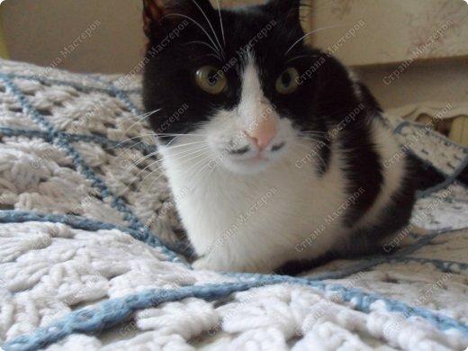 Всем мяу! Я - кошка и решила похвастаться собой! А то, так называемая хозяйка, одно поделочки свои выкладывает, но я ведь лучше!  фото 2