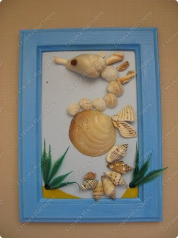 морской конек фото 1