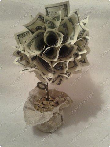 елочки 2 и денежное дерево  фото 4