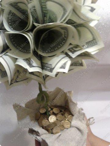 елочки 2 и денежное дерево  фото 5