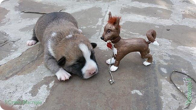 Здравствуйте ! Приветствую всех на моей страничке! Попросила племянница сшить ей маленькую собачку! Взяла я кусочек колготок и... вот родилась такая собачка. Поместилась на ладошке. фото 5