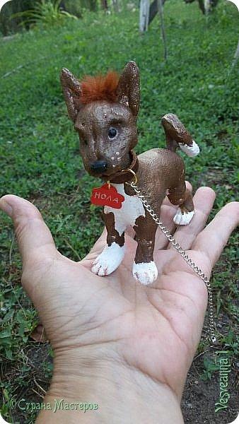 Здравствуйте ! Приветствую всех на моей страничке! Попросила племянница сшить ей маленькую собачку! Взяла я кусочек колготок и... вот родилась такая собачка. Поместилась на ладошке. фото 1