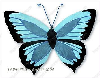 Бабочка морфида