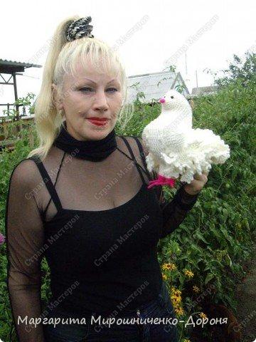 вот такой голубь связался в подарок фото 2