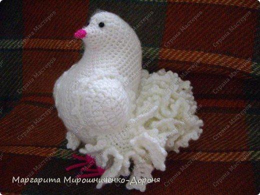 вот такой голубь связался в подарок фото 1