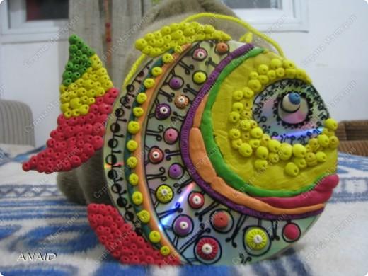 диско-рыбки