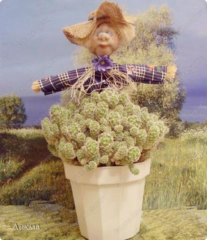 Вот этот кактус чем то мне все время напоминает капустку. Он то  и стал толчком для новой идеи сделать маленькое забавное чучело. фото 1
